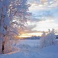 Winterfeste